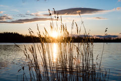 Dramatic sunrise over the calm river. In spring with bent grass against sun. Daugava, Latvia Royalty Free Stock Photo