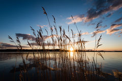 Dramatic sunrise over the calm river. In spring with bent grass against sun. Daugava, Latvia Stock Image