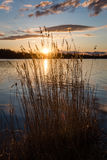 Dramatic sunrise over the calm river. In spring with bent grass against sun. Daugava, Latvia Royalty Free Stock Image