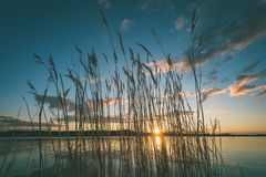 Dramatic sunrise over the calm river - vintage effect. Dramatic sunrise over the calm river in spring with bent grass against sun. Daugava, Latvia - vintage Royalty Free Stock Images