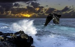 Dramatic sunrise over the ocean before storm with flying raven - Lanzarote. Canary Islands Royalty Free Stock Photo
