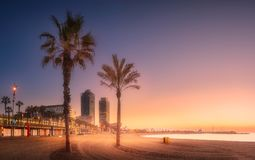 Dramatic sunrset on beach of Barcelona with palm royalty free stock photo