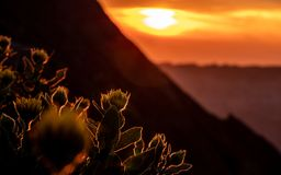 dramatic sunset behind flowers, silhouette of flowers with summer golden sunset shining at flowers royalty free stock image