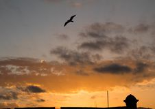 Dramatic sunset with bird royalty free stock photography
