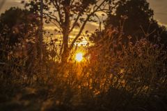 Dramatic sunset on a grassy meadow. Nature background.  royalty free stock images