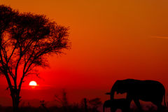 Dramatic sunset in Kruger national park south africa Royalty Free Stock Photos