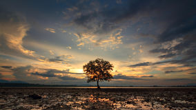 Dramatic sunset with lonely tree Royalty Free Stock Image