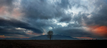 Dramatic sunset. Ominous cloud formation with a lonely tree on the foreground stock images