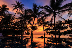 Dramatic Sunset with silhuettes palm in Thailand Stock Photography