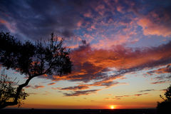 Dramatic sunset sky behind a silhouette of a tree Stock Images