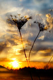 Dramatic sunset with wild grass Royalty Free Stock Photography