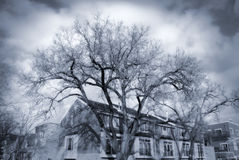 Dramatic Trees. House with dramatic trees and sky stock photography