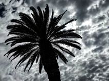 Dramatic tropical palm and cloudy sky royalty free stock images