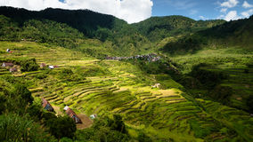 Dramatic View of Mountain Village and Maligcong Rice terraces. Lush green view of the Philippine rice terraces and mountain community Royalty Free Stock Images