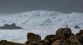 Dramatic waves with pelicans. Heavy surf creates dramatic wave action at Pebble Beach on the Monterey Peninsula in California as Brown Pelicans fly by stock photos