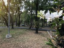 Dramatic white flower and asphalt path way in fall autumn public park with warm light for background , relax or fresh concept stock photo