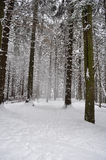 Dramatic winter landscape. In forest stock image