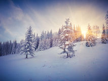 Dramatic winter morning in the forest. Royalty Free Stock Photo