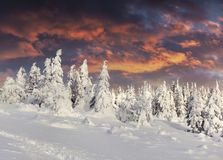Dramatic winter sunrise in Carpathian mountains with snow cowere Royalty Free Stock Photos