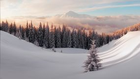 Dramatic wintry scene with snowy trees. Royalty Free Stock Images