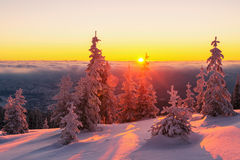 Dramatic wintry scene with snowy trees. Fantastic orange evening landscape glowing by sunlight. Dramatic wintry scene with snowy trees. Kukul ridge, Carpathians Stock Photo