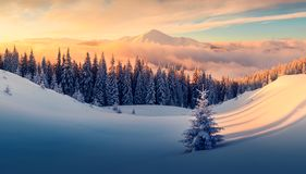 Dramatic wintry scene with snowy trees. royalty free stock photos