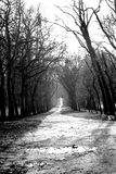 Dramatic wood path Royalty Free Stock Images
