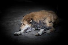 Dramatique du chien qui est l?pre se trouvant sur le plancher avec tristesse photographie stock