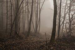 Dramatisch bos bij schemer 2 Stock Fotografie