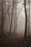 Dramatisch bos bij schemer 3 Stock Afbeeldingen