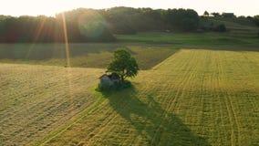 Dramatisch landelijk landschap met oude, rottende hut onder een grote boom in het midden van gebieden en weiden stock video