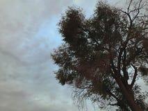 Dramatische Boom en Wolken Royalty-vrije Stock Afbeelding