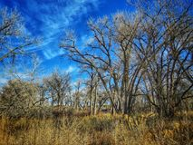 Dramatische de Winterhemel over het Cottonwood-bos bij het Park van de Staat van Meerpueblo Stock Foto