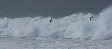Dramatische golven met pelikanen Royalty-vrije Stock Foto's