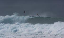 Dramatische golven met pelikanen Royalty-vrije Stock Afbeelding