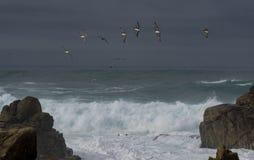 Dramatische golven met pelikanen Stock Fotografie