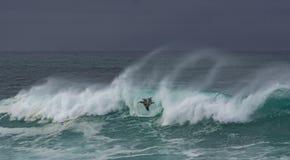 Dramatische golven met pelikanen Stock Foto's