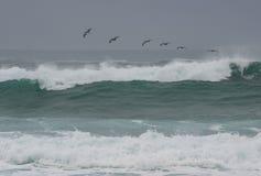 Dramatische golven met pelikanen Stock Afbeelding