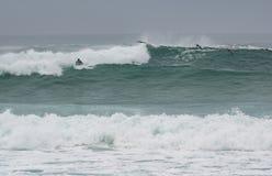 Dramatische golven met pelikanen en surfer Stock Afbeelding