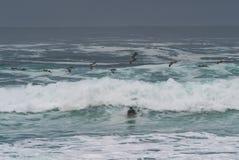 Dramatische golven met pelikanen en surfer Royalty-vrije Stock Foto