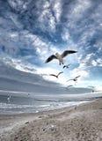 Dramatische hemel op het strand met vogels Stock Afbeeldingen