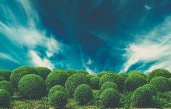 Dramatische hemel over struiken stock afbeeldingen
