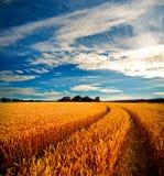 Dramatische mening van wheatfields Royalty-vrije Stock Foto's
