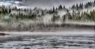 Dramatische Mist in Forest Along Lake Stock Fotografie