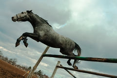Dramatische paardsprong Stock Fotografie