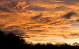 Dramatische peachy zonsonderganghemel over donkere treeline royalty-vrije stock foto's