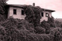 Dramatische scène - het Altijdgroene klimop groeien op bakstenen muur van oud huis royalty-vrije stock foto