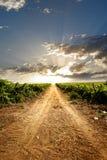 Dramatische wijngaard Royalty-vrije Stock Foto's