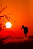Dramatische zonsondergang in het nationale park Zuid-Afrika van Kruger Stock Foto's