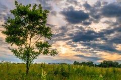 Dramatische zonsonderganghemel over de gebloeide Bogolyubovo-weide, Vladimir-gebied, Rusland Schilderachtige vreedzame hoek van a royalty-vrije stock foto